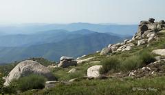 Cévennes-0201 (hervv30140) Tags: paysage horizon montagne rocher lande lozère vue loin lointain sommet