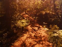 Light&Shadows (evisdotter) Tags: lightshadows ljusskuggor path stig forest skog nature sooc summer