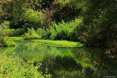 #west_bekaa #landscape_photography #reflection #nature_photography #photography #green #shadow #nature #photo (salam.jana) Tags: westbekaa landscapephotography reflection naturephotography photography green shadow nature photo