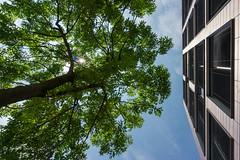 Baum vs. Fassade (ab-planepictures) Tags: baum gebäude architektur haus bürogebäude duisburg innenhafen duisburger deutschland germany tree architecture