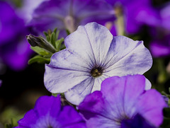Flowers. (ost_jean) Tags: flowers fleurs bloemen nikon d5200 tamron sp 90mm f28 di vc usd macro 11 ostjean