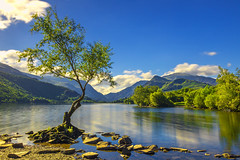 Lone tree at Llyn Padarn (saile69) Tags: lonetree wales welsh photography llanberis summer llynpadarn padarn tourist