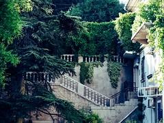 (Overnature) Tags: севастополь крым sevastopol crimea улица стены лестницы плющ walls streets stairs ivy