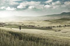 Fields near Pienza (alexanderkoch) Tags: italien toskana workshop pienza orcia valdorcia baum feld wolken hügel