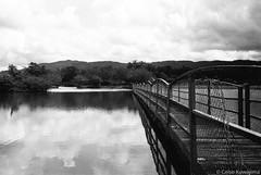 Parque Centenário da Imigração Japonesa (Celso Kuwajima) Tags: leicasummiluxm3514 epsonv800 silverfastai landscape ilfordpan400 leicam4 outdoor analogphotography 20170527 bw mogidascruzes sãopaulo brazil br lake bridge
