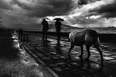 izmir noire (anilaydn) Tags: izmir turkey street popular vsco x100s x100 fujifilm fuji voyeur everydayturkey dog noir