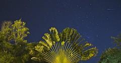Falling Star (diegocarvalho3) Tags: sky longaexposição night longexposition estrelacadente