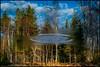 Upsidedownia (Jonas Thomén) Tags: lake sjö water vatten uppochner upsidedown splash skvätt trees träd skog forest