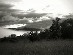 Brume de juin (hibou75) Tags: brume brouillard noirblanc art paysage campagne nature lauragais hautegaronne