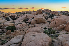 Sea of Rock at Sunset (jthight) Tags: ca usa landscape sunset nationalpark joshuatree photoshop rocks nikond810 california landform clouds march rocky trees desert afzoom2470mmf28g sky tree unitedstates joshuatreenationalpark lightroom tk twentyninepalms us
