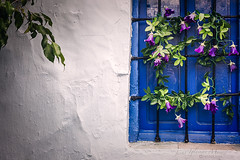 Una ventana a la primavera