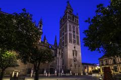 La Giralda entre naranjos (Alberto Goñi García) Tags: giralda sevilla d7100 nikon 1020mm sigma nocturna night travel viajar turismo tourism andalucía españa