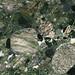 Marinace Green Granite (polymict metaconglomerate) (Ouricuri do Ouro Formation, Mesoproterozoic, ~1.6-1.7 Ga; Bahia, Brazil) 5
