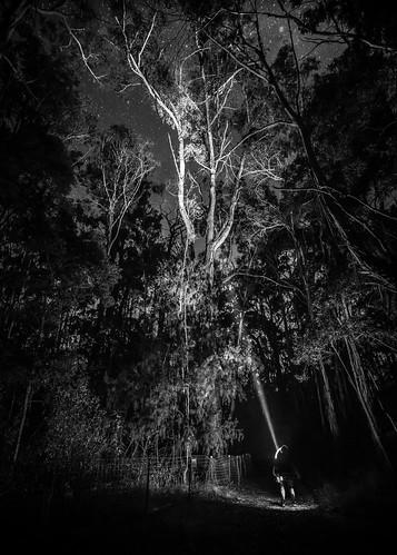 Marcia Walk in The Woods-3
