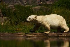 ZOOM Erlebniswelt - Alaska