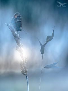 sueños de una mariposa