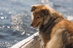 2017-04-16 Sailing at B.U. 011 (consolecadet) Tags: boston bostonuniversity cambridge charlesriver daily dogs lucythedog mollypleskus river sabrinavanmell sailing sports tufts watersports women womens