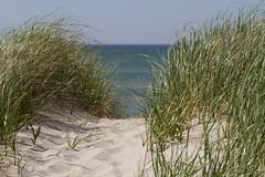 Summer's Path (brucetopher) Tags: dune grass green beach sea coast seacoat grassy summer water ocean transluscent teal blue aqua path sandy sanddune dunes park hike solitude hiking secret private hidden