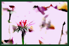 untitled (larrynunziato) Tags: abstract floral digitalwatercolor collaborration