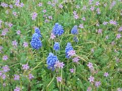 1155 (en-ri) Tags: fiorellini erba grass little flowers rosa lilla sony sonysti