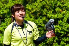 Female Grey Parrot, Teru and Bird Master Girl : ヨウムのテルとバードショーのお姉さん (Dakiny) Tags: 2017 summer june japan kanagawa yokohama asahiward park city street outdoor zoo yokohamazoologicalgardens zoorasia show birdshow people creature animal bird bpkeh nikon d750 sigma apo 70200mm f28 ex hsm apo70200mmf28dexhsm sigmaapo70200mmf28dexhsm nikonclubit