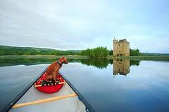Raiding Castles! • • • • • #campingwithdogs #hikingwithdogs #dogsonadventures #dogsthathike #adventuredog #thestatelyhound #houndandlife #backcountrypaws #doglove #hikingdogsofinstagram #excellent_dogs #adventureswithdogs #topdogphoto #heelergram #hikingd (watson_the_adventure_dog) Tags: raiding castles • campingwithdogs hikingwithdogs dogsonadventures dogsthathike adventuredog thestatelyhound houndandlife backcountrypaws doglove hikingdogsofinstagram excellentdogs adventureswithdogs topdogphoto heelergram hikingdog animaladdicts traildog ireland bestwoof campingcollective visualsgang wanderireland instaireland inspireland irishpassion irelandgram campingculture stayandwander