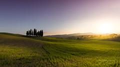 A9906487_s (AndiP66) Tags: boscettodeicipressi boscetto zypressen cypresses cipressi zypressenwäldchen sanquiricodorcia sanquirico sonnenuntergang sunset nebel dunst fog mist sonne sun evening abend april spring 2017 siena pienza valledorcia valle dorcia toscana tuscany italien italy sony alpha sonyalpha 99markii 99ii 99m2 a99ii ilca99m2 slta99ii tamron tamronsp1530mmf28diusd tamron1530mm 1530mm f28 amount andreaspeters