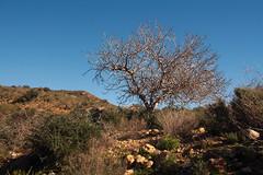 las Balsicas (H&T PhotoWalks) Tags: landscape tree arid tan lasbalsicas mazarrón murcia spain sigma18250 canoneos400d
