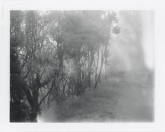 "Parque nacional de Garajonay 33 • <a style=""font-size:0.8em;"" href=""http://www.flickr.com/photos/7138753@N04/34728337350/"" target=""_blank"">View on Flickr</a>"
