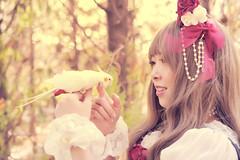 SDF_0749 (SendoFu) Tags: bonnet ボンネット エプロン風スカート blouse bl ブラウス headbow kc カチューシャ bnt 蕾絲 維多利亞 jsk op onepiecedress ワンピース jumperskirt ジャンパースカート nop lolita lolitafashion 蘿莉塔 蘿莉塔時裝 ロリータ・ファッション sweetlolita classicallolita