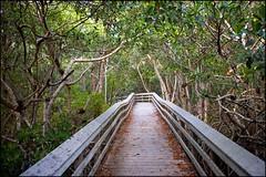 2011-01_DSC_2995_20170309 (Réal Filion) Tags: miami floride étatsunis forêt mangrove westlake parc national everglades nature environnement flore arbre végétal trottoir sidewalk forest flora tree vegetable park environment usa florida