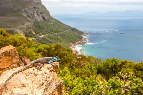 Kaapstad_BasvanOort-115