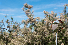 Bella Compo..... (albi_tai) Tags: alberi fiori cielo azzurro sky specchio mirror strada riflesso bellacompo laguna mare pellestrina venezia albitai nikon d750 nikond750