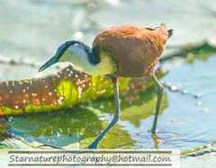 _DJA3734 copy (naturephotographywildlife) Tags: kruger wildlife scenery animals birdlife a99ii africa park
