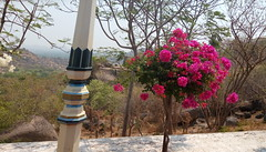 Random click at Ramoji Film City, Hyderabad (komal chougule) Tags: ramoji hyderabad ramojifilmcity randomshot street pinkflowert