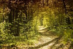 *** (pszcz9) Tags: polska poland przyroda nature natura las forest ścieżka path wiosna spring poranek morning pejzaż landscape beautifulearth sony a77