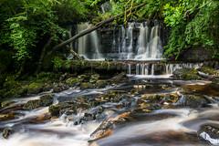 Campsie Glen (ola_er) Tags: waterfall glen water flow scotland nikon campsie river