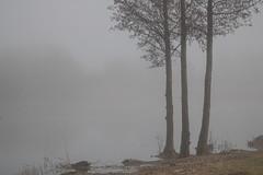 Three (Infomastern) Tags: ribersborg damm dimma fog mist pond tree träd vatten water