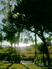 shore trees2