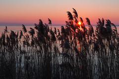 Port Rowan Sunrise (B.E.K.) Tags: sunrise port rowan ontario canada outdoor landscape sun water sky ice frozen lake erie