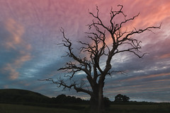 Sunset Tree (Col3Train) Tags: sunset sussex downs