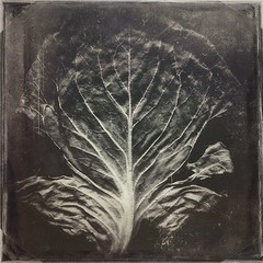 Produc(ed)-10672 (Poetic Medium) Tags: kitcamghostbird produce food square texture cabbage snapseed stilllife organic mextures blender ipod