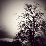 Just tree thumbnail