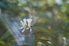 honeysuckle (severalsnakes) Tags: kansas pentax saraspaedy shawnee shawneemissionpark accuradiamatic13528 extensiontube flower honeysuckle k1 m42 macro manual manualfocus screwmount
