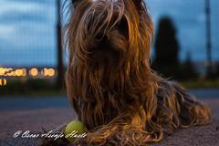 Popi Parque Medianoche (OscarAsenjoHuete) Tags: animal animalesdomésticos mamífero mascota medianoche perro