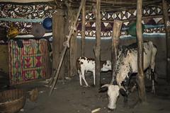inter case silté . Ethiopia (courregesg) Tags: ethiopia ethnic architecture architecturetraditionelle art alaba silté
