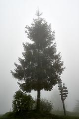 DSC03682 (macieque) Tags: beskid beskidy mały góry mountains trekking nature spring foggy