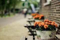 HBW - Tagetes (J a n W i l l e m) Tags: tagetes hbw dof flowers orange bokeh pentacon 50mm prime vintage pentax k10d