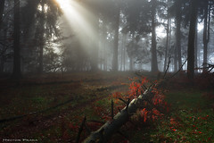 Touched by the light (Hector Prada) Tags: bosque luz otoño niebla bruma momento árbol naturaleza magia forest light autumn fog mist mistic moment tree nature paisvasco basquecountry
