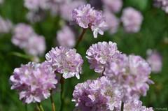 (Sandra Király Pictures) Tags: flower flowers spring nature outdoor botanicalgarden ogródbotaniczny warsaw warszawa poland